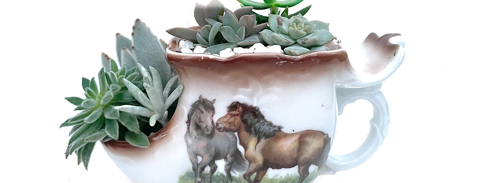 A lovely horse themed vintage shaving jug filled with colourful succulents