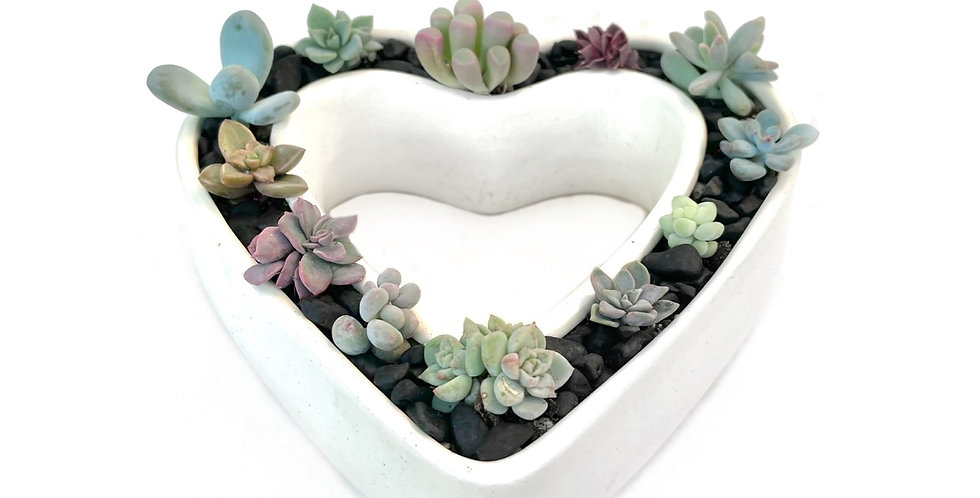 A gorgeous vintage heart shaped vase filled with colourful succulents
