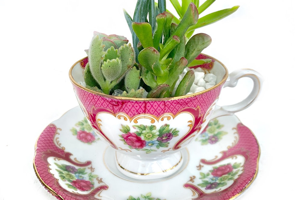 A beautiful vintage teacup cup set filled with colourful succulents