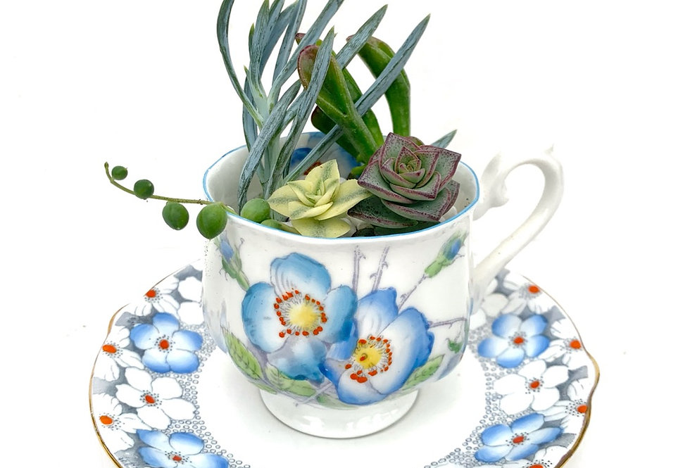A beautiful blue flower vintage teacup set filled with colourful succulents