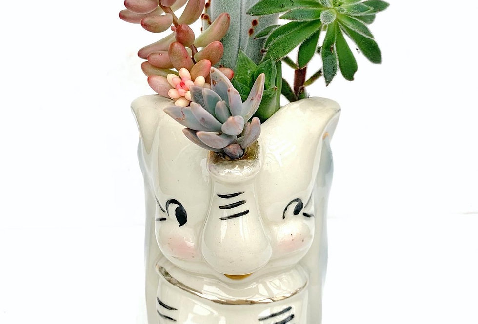 A gorgeous vintage 'Dumbo' jug filled with colourful succulents