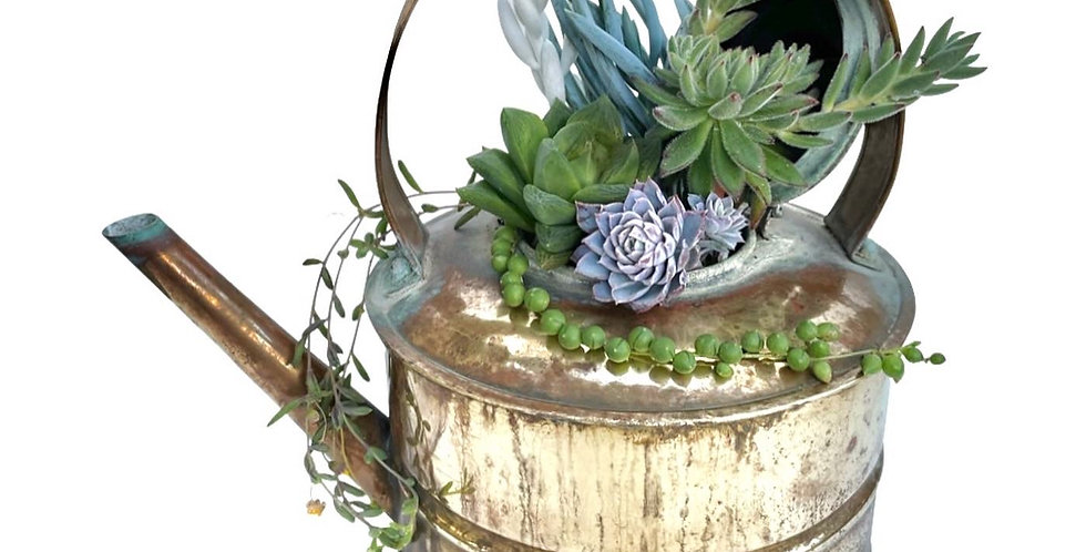 A lovely vintage brass kettle filled with a variety of colourful succulents