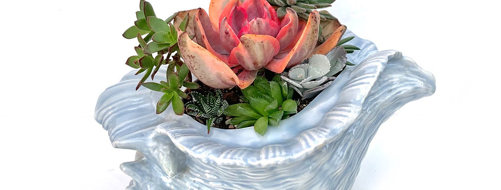 A gorgeous very large blue pottery shell full with colourful succulents