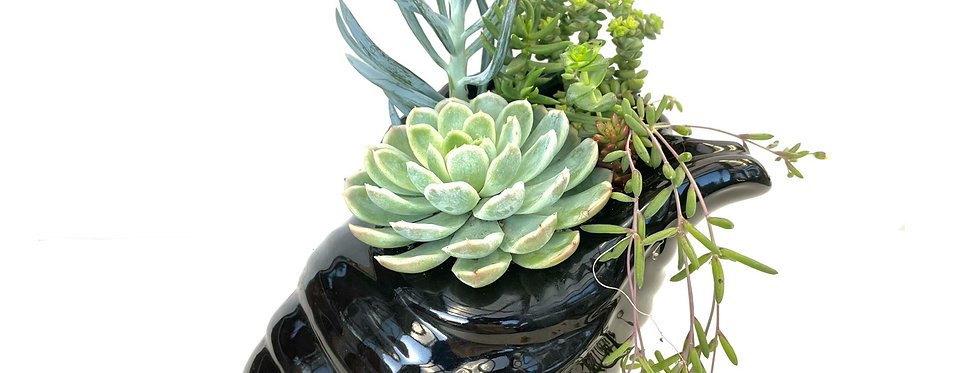 A beautiful black large shell design vase filled with colourful succulents