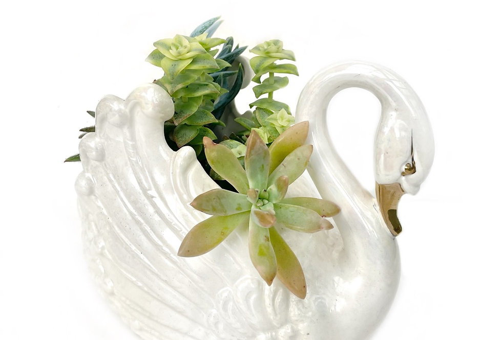 A very elegant vintage swan vase filled with colourful succulents