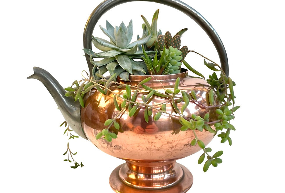 A beautifully shaped copper teapot filled with a variety of colourful succulents
