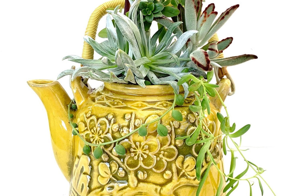A very pretty Japanaese teapot full with colourful succulents