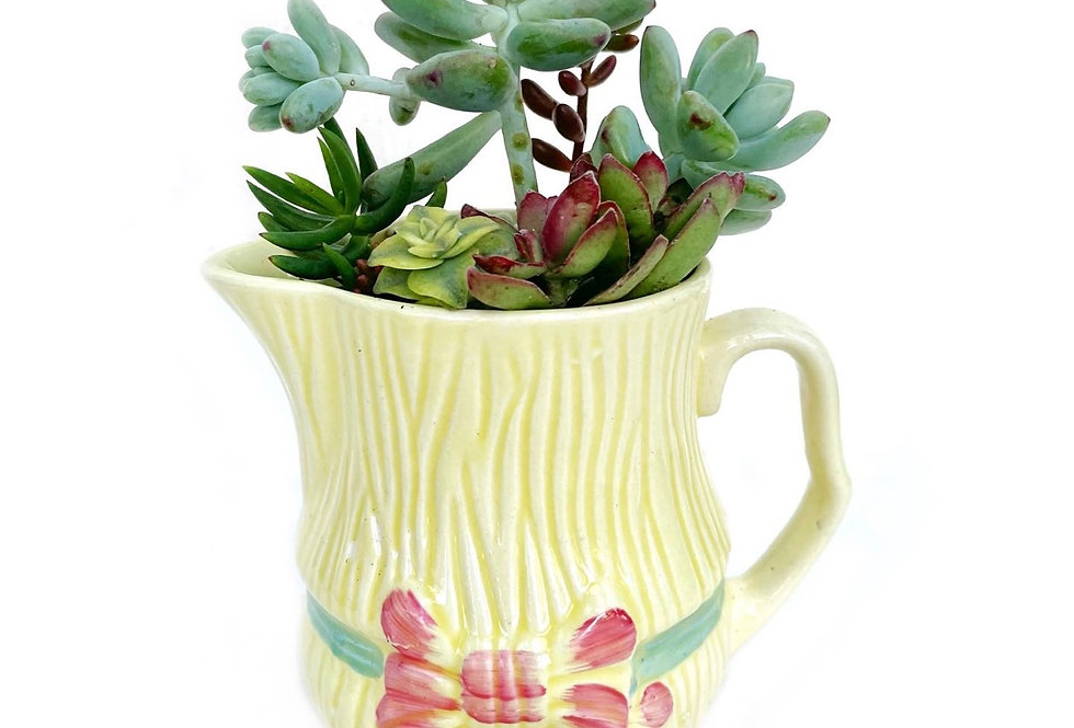 A beautiful vintage yellow 'Sylvac' jug filled with a variety of succulents