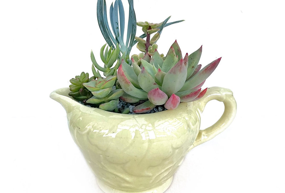 A lovely pale lemon vintage 'Sylvac' jug filled with a variety of succulents