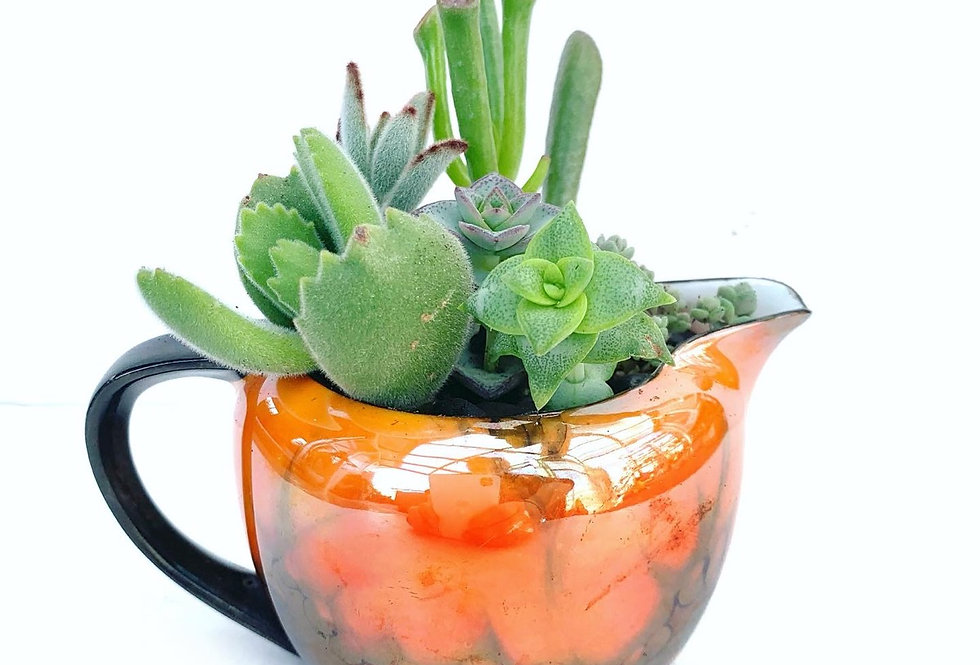Beautiful range glaze small jug filled with colourful succulents