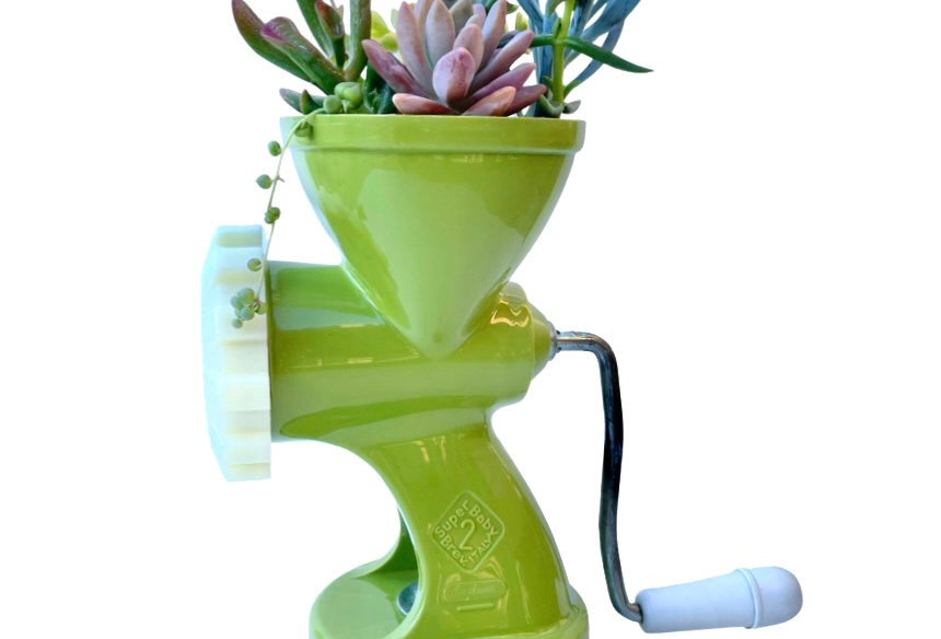 A cool retro green kitchen top mincer filled with a variety of succulents