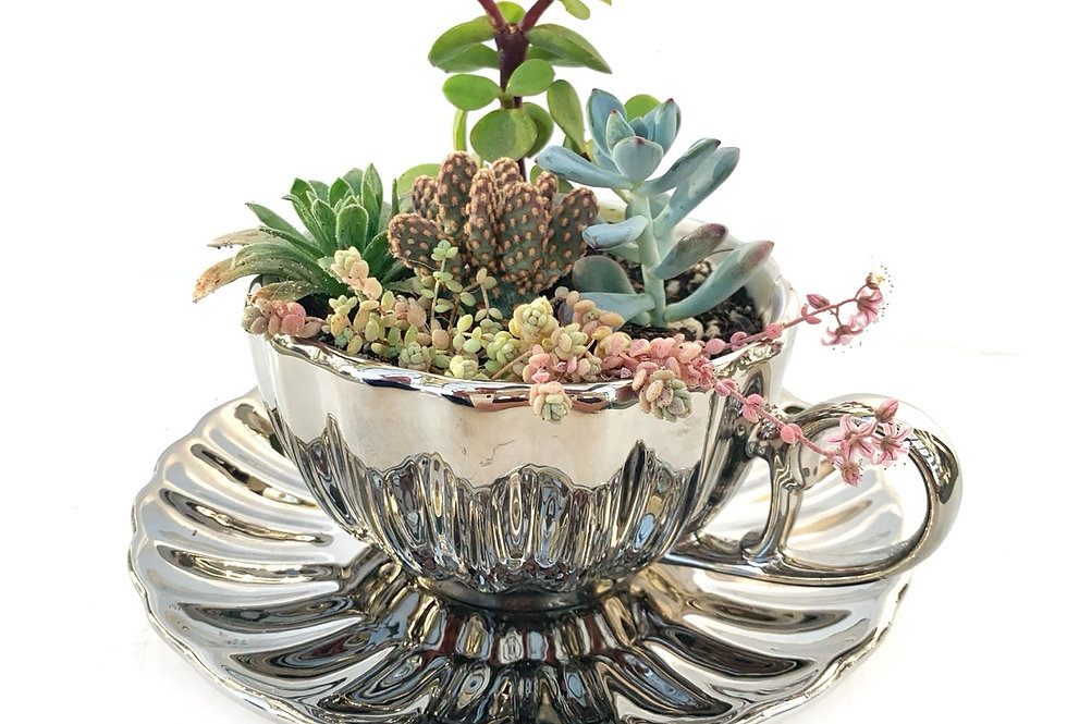 A lovely chrome look teacup set filled with colourful succulents