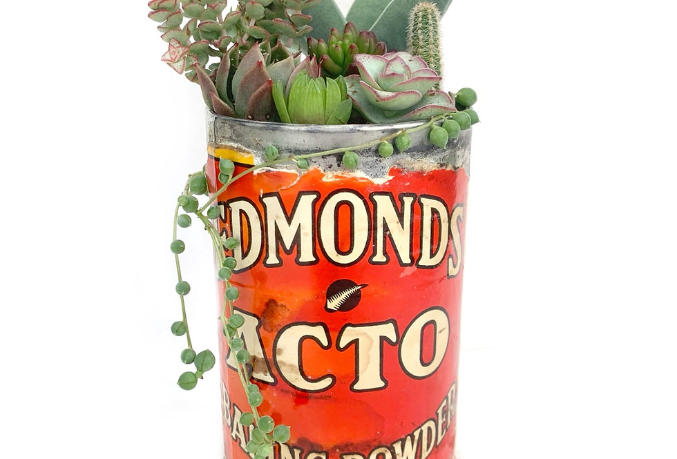 A lovely vintage Edmonds tin filled with colourful succulent