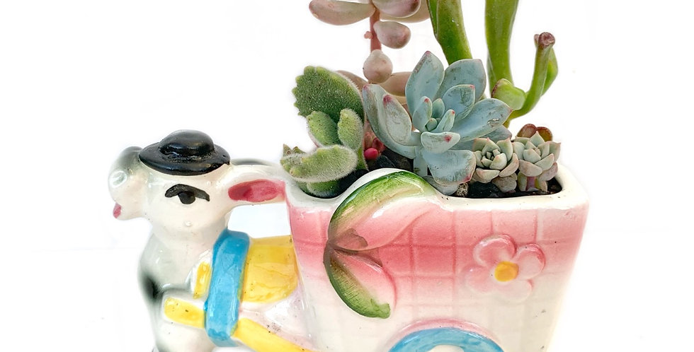Cute vintage donkey and cart filled with colourful succulents