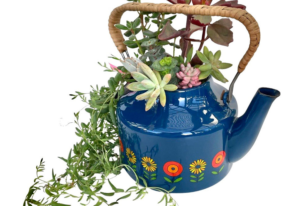 Gorgeous enamel teapot filled with colourful succulents