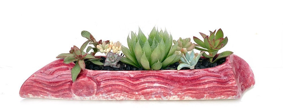 A beautiful red pink glazed vintage posy vase filled with colourful succulents