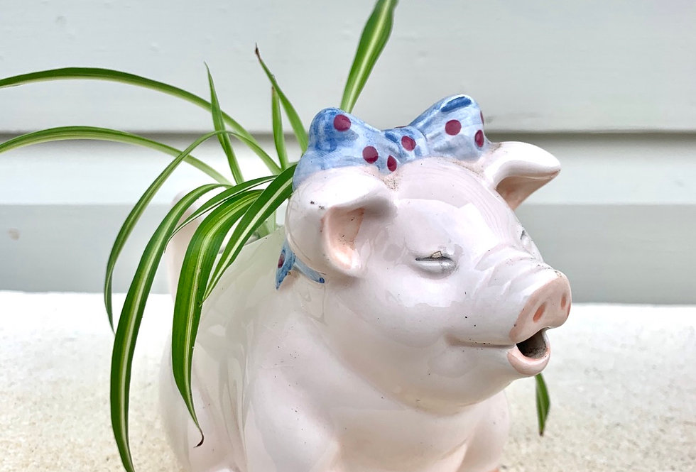 A very cute pig jug with a happy spider plant