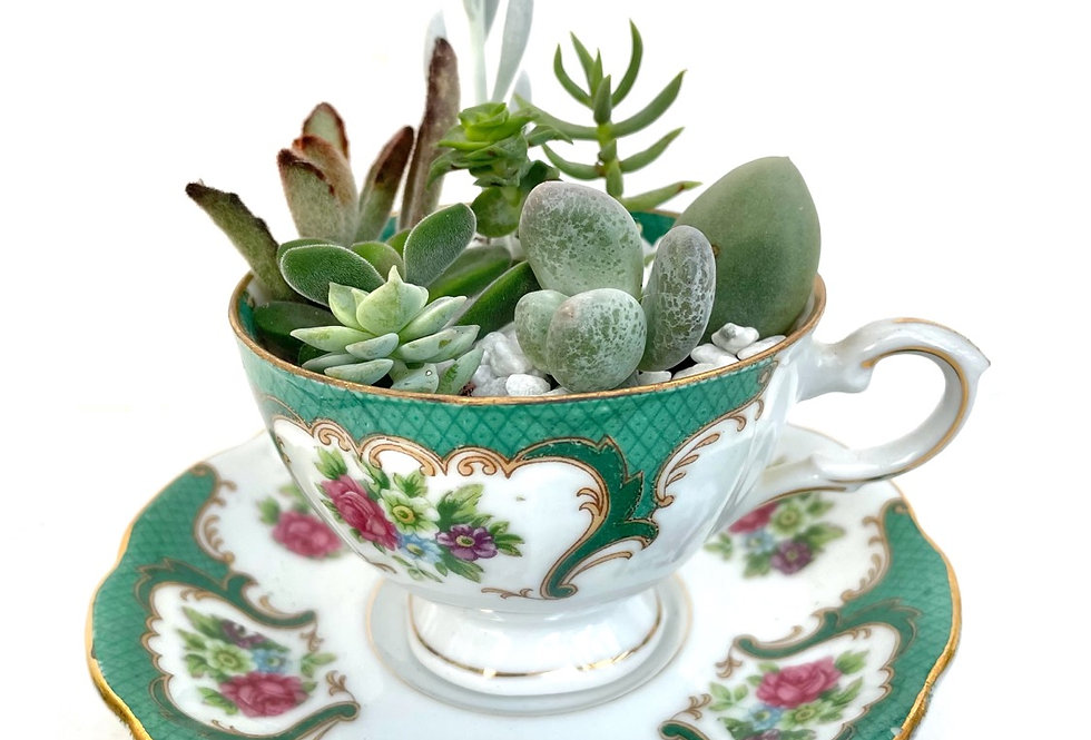 A beautiful vintage teacup set filled with succulents
