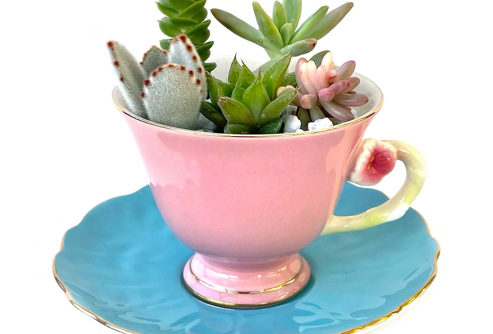 A gorgeous pink and blue teacup set filled with colourful succulents