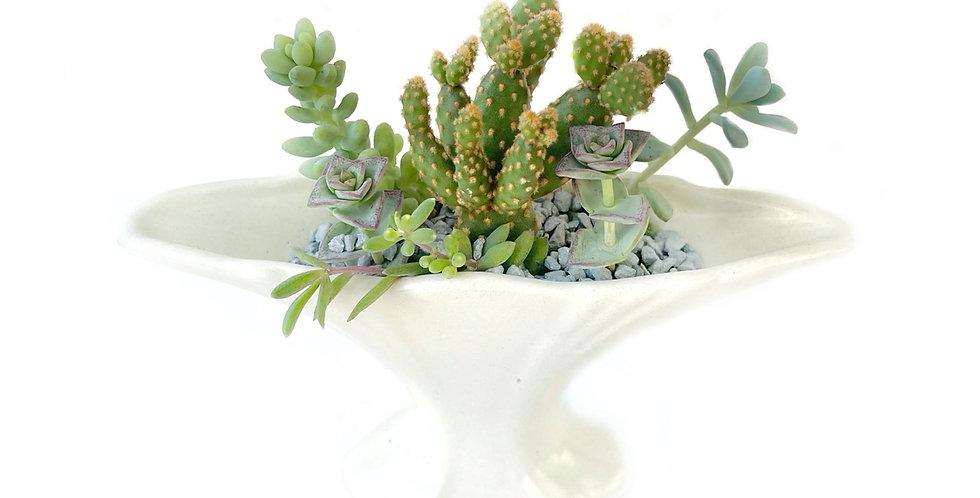 An elegant shaped vintage vase filled with colourful succulents