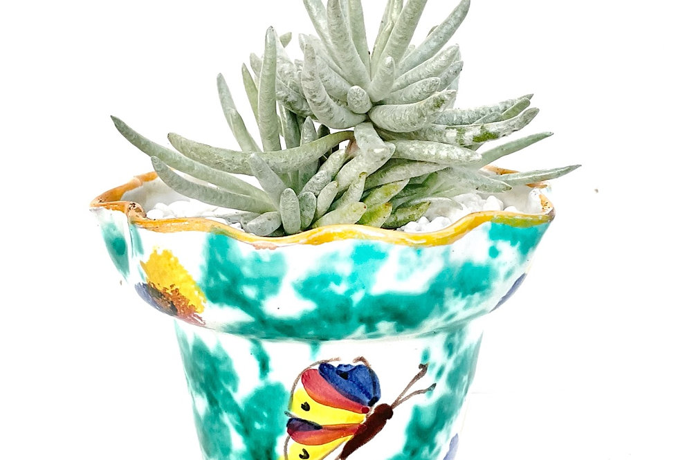 A unique shaped & decorated vase filled with a happy succulent