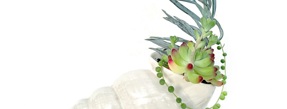 A vintage Shorter and Sons shell vase filled with a variety of succulents