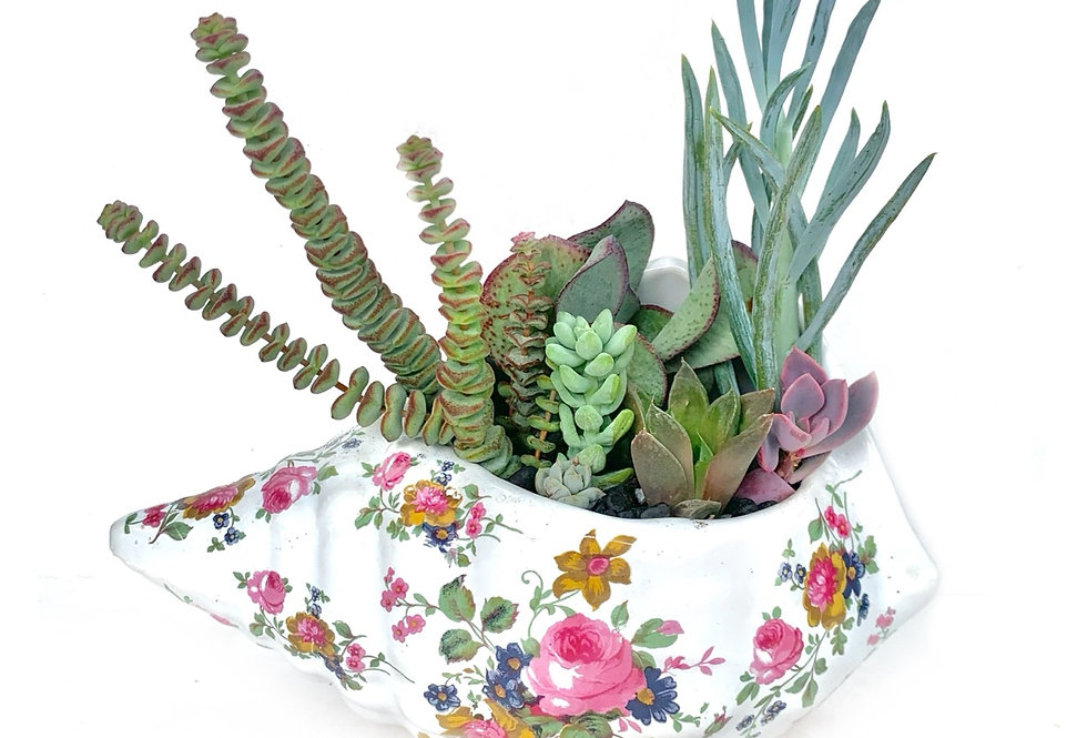 A gorgeous floral design shell vase filled with colourful succulents