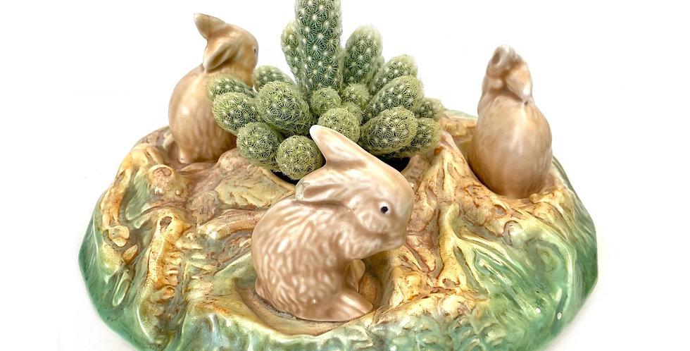 A gorgeous vintage Sylvac bunny vase with beautiful cactus