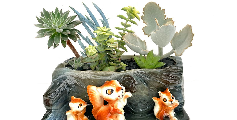 A very cute squirrel and log design vase full with colourful succulents