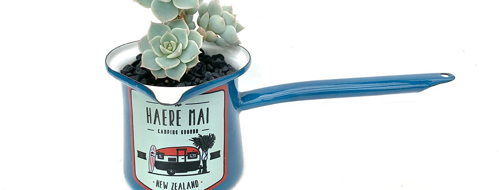 A lovely 'Kiwiana' coffee pot filled with beautiful succulents