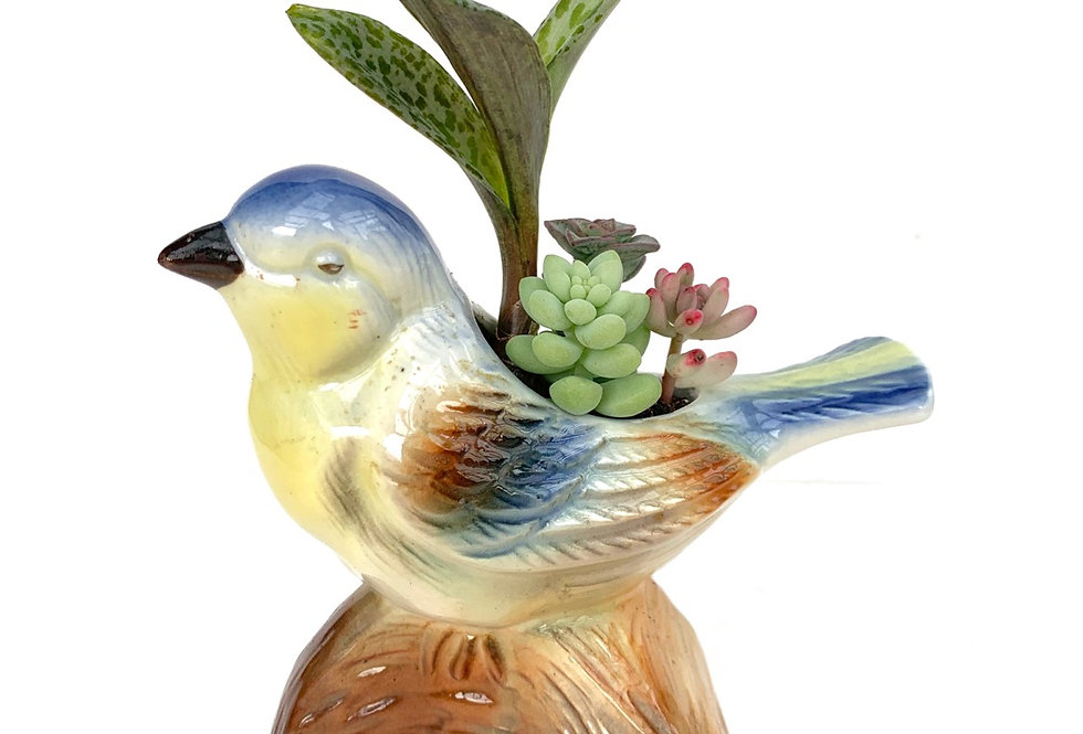 A beautiful vintage bird vase filled with colourful succulents