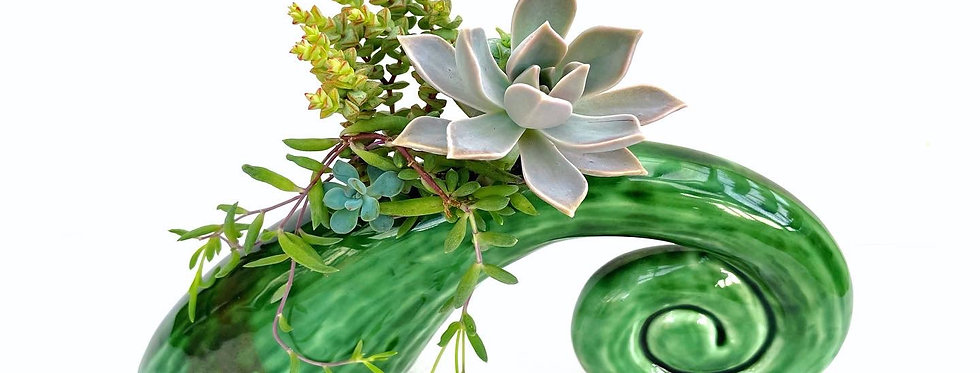 A beautiful green Koru vase vase filled with colourful succulents