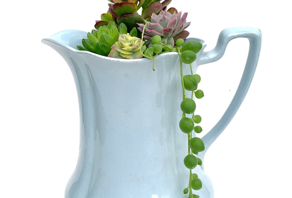 A beautiful baby blue vintage jug filled with a selection of succulents