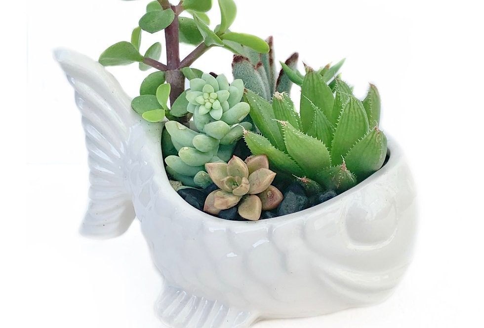 Cute white pottery fish filled with colourful succulents