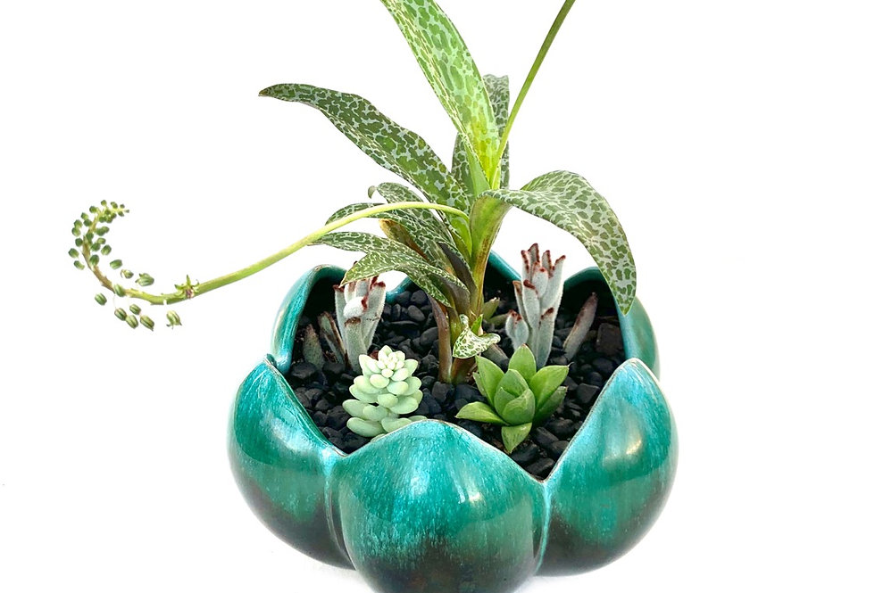 Gorgeous jade green 'Mountain Blue' Lily vase filled with colourful succulents