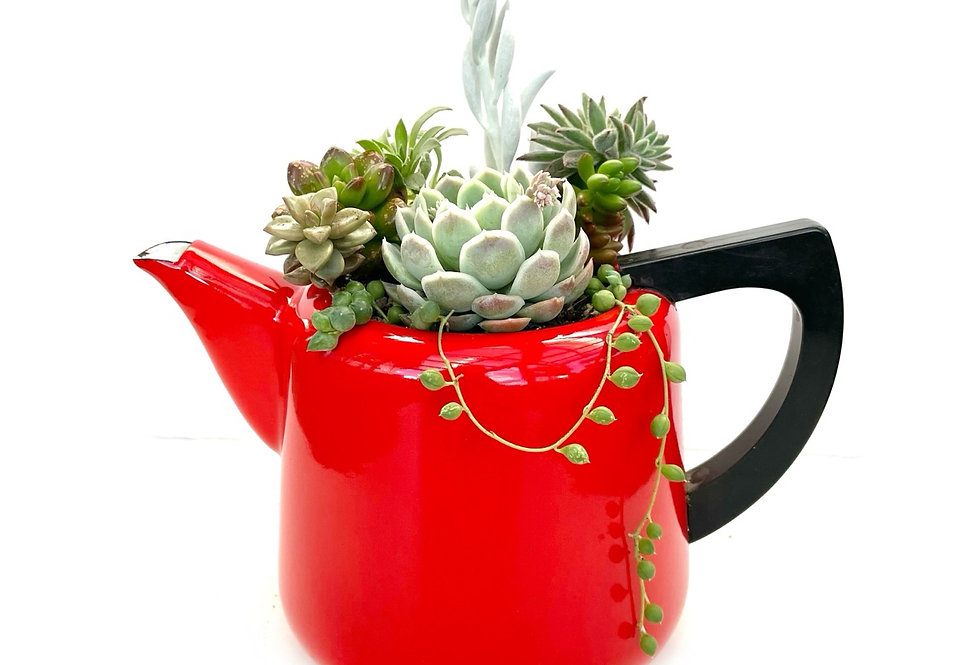 A beautiful bright red vintage enamel teapot filled with succulents