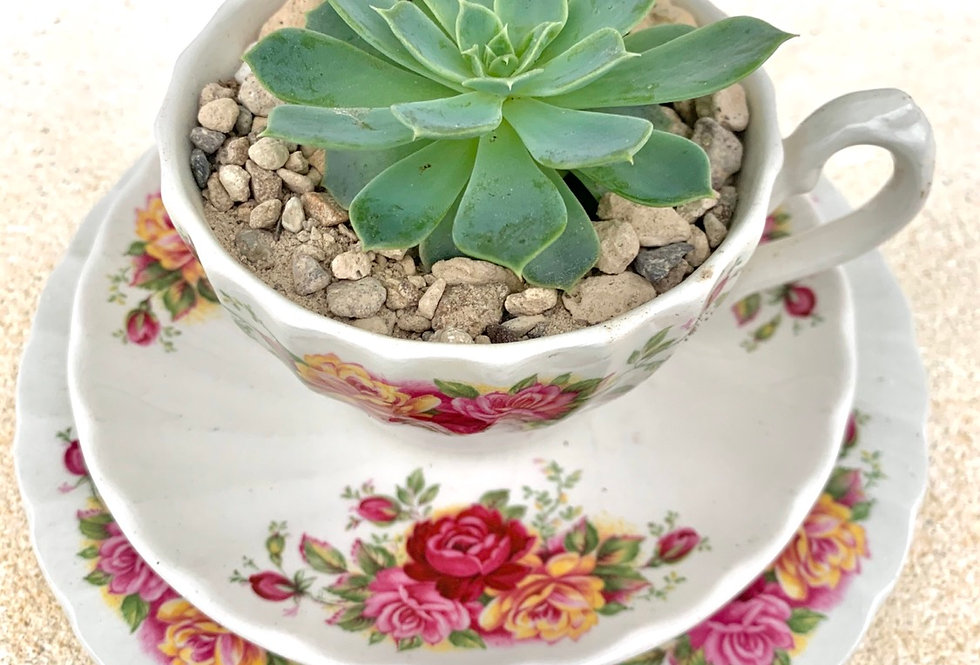 A lovely floral teacup and saucer set with a happy succulent