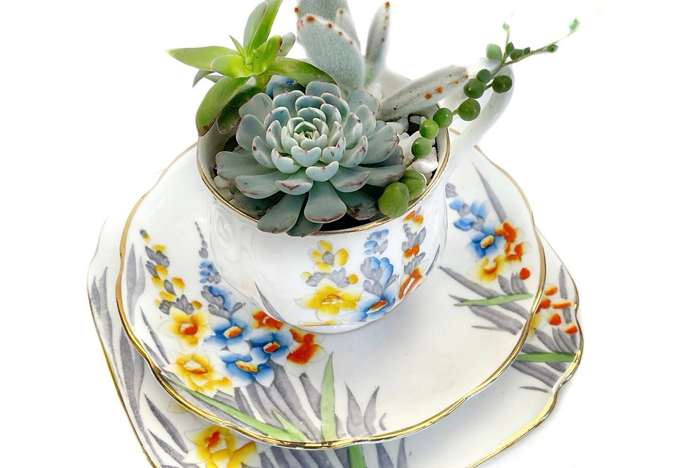 A beautiful design Royal Albert teacup set filled with colourful succulents