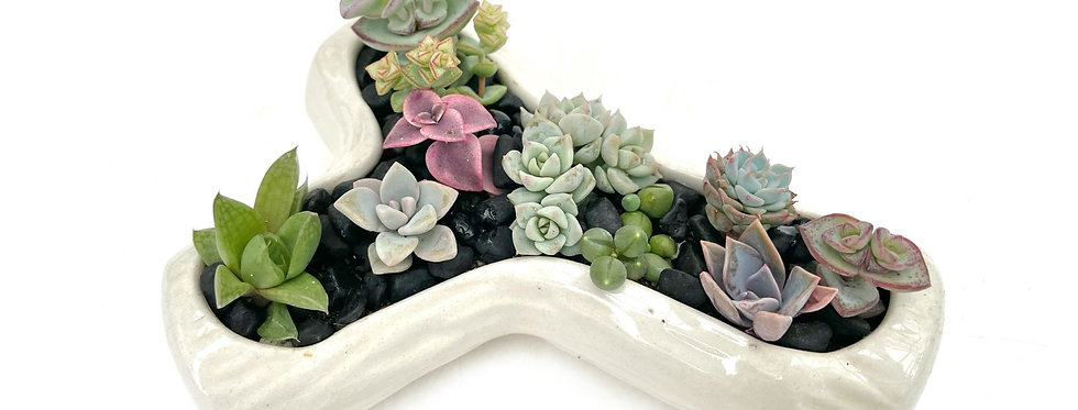 A lovely vintage off white posy vase filled with colourful succulents