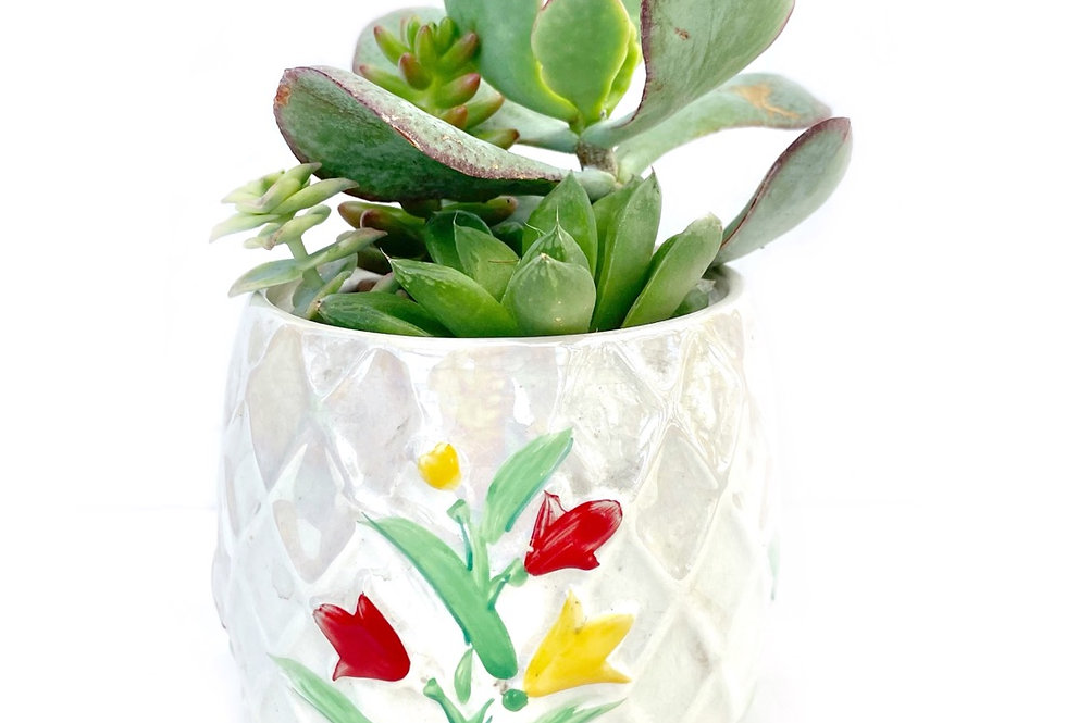 A lovely hand painted vintage 'Wade' sugar bowl filled with colourful succulents