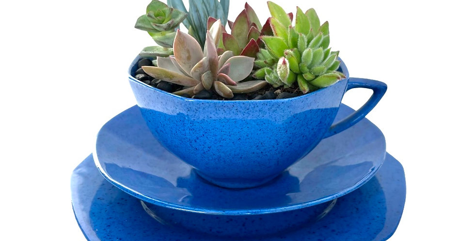 A stunning blue vintage teacup set filled with a variety of colourful succulents