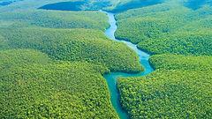 amazon-rainforest.jpeg