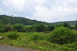 Panamaram Wayanad Site  (7)