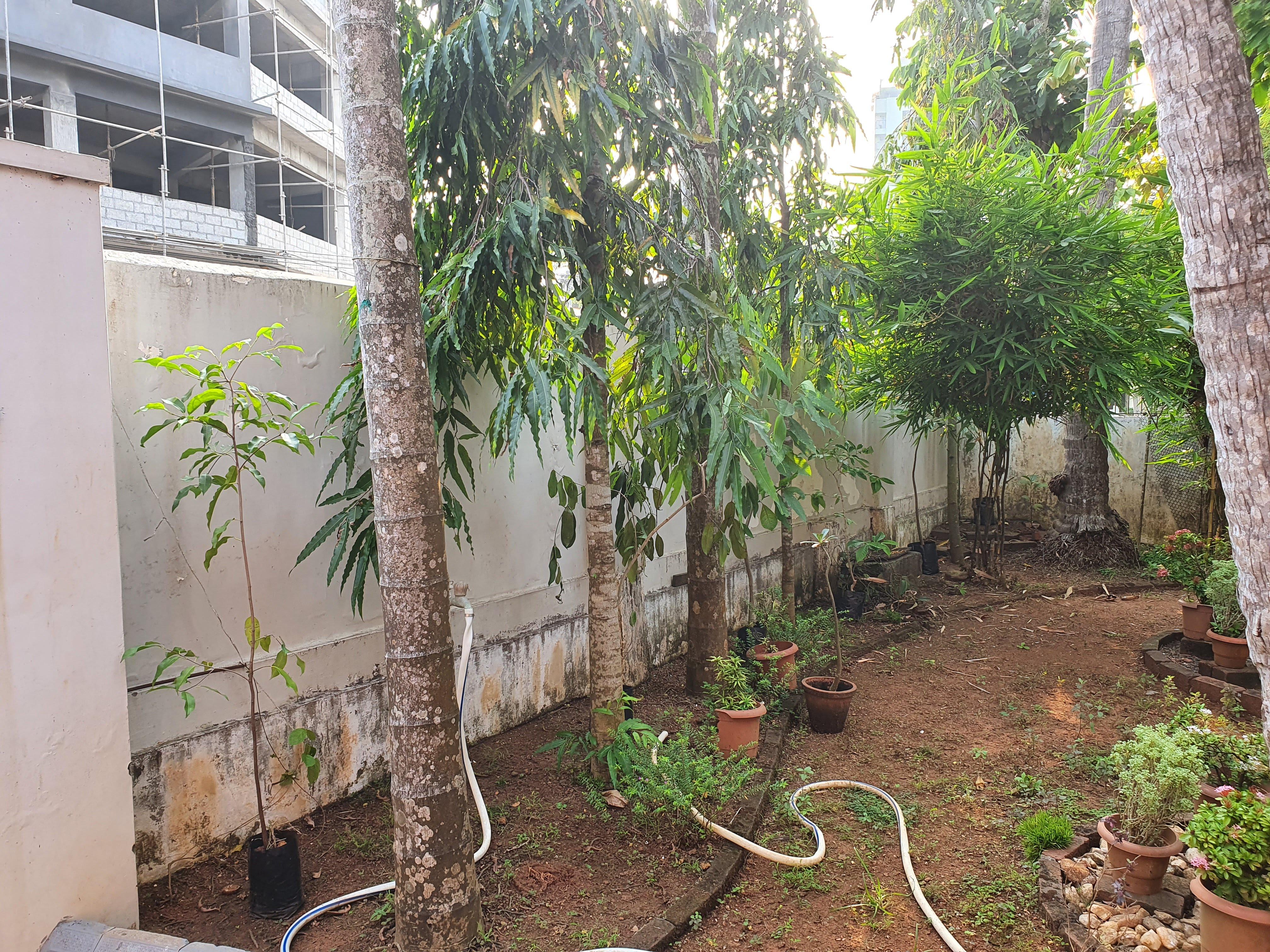 A Small Miyawaki backyard forest at Home in Calicut
