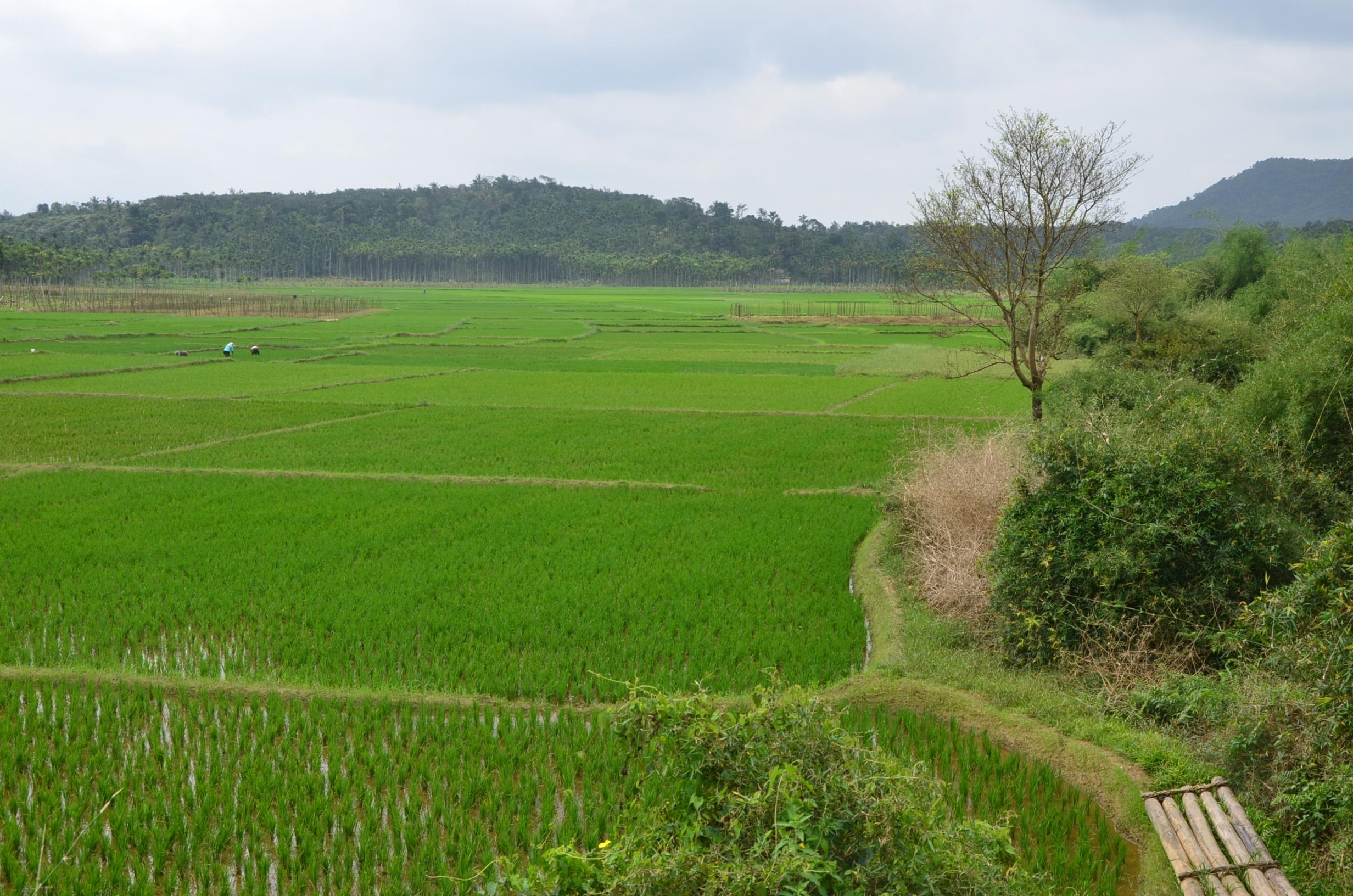 Panamaram Wayanad Site  (20)