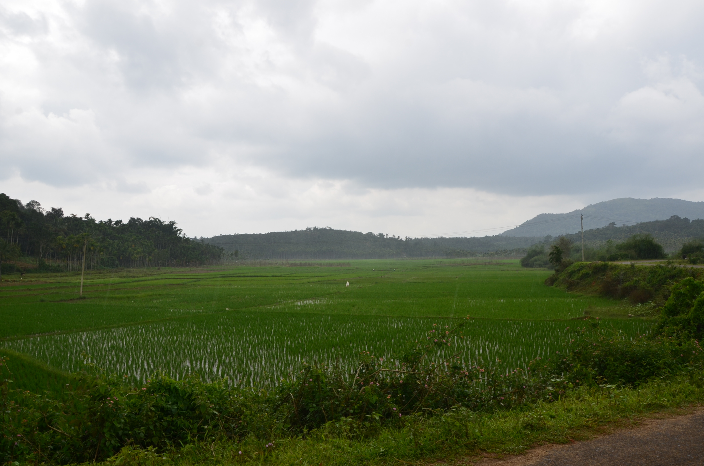 Panamaram Wayanad Site  (19)