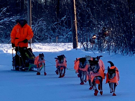 K300 Out of Kalskag: Six mushers vying for position