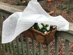 winter plant cover