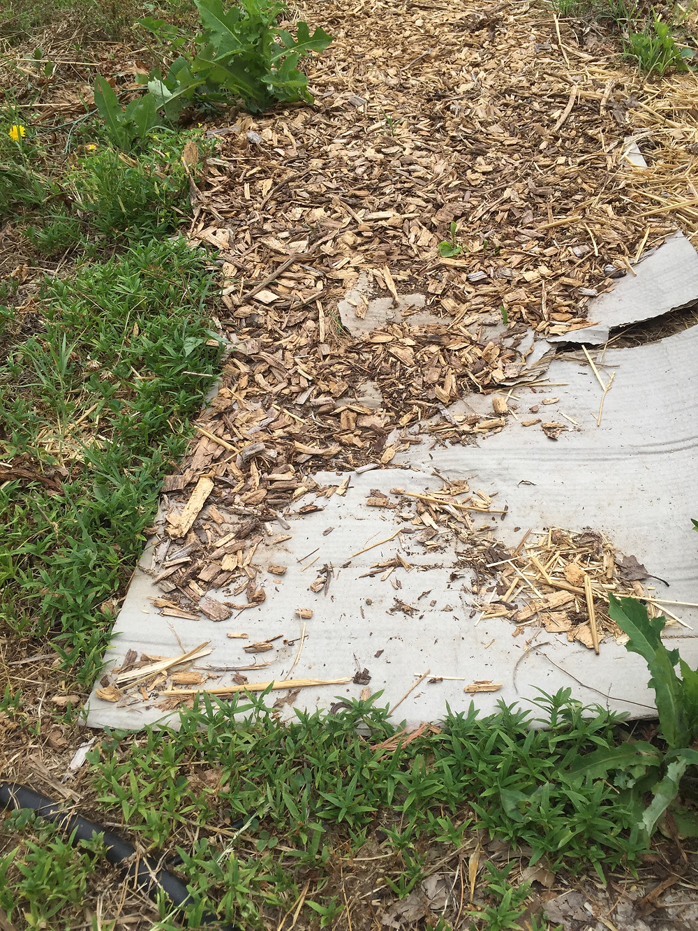 wood chips on top of cardboard surrounded by weeds