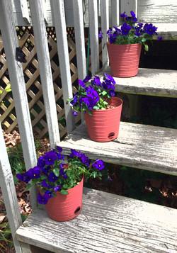 Terracotta colored porch pots